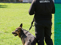 DOG PATROLS & HANDLERS